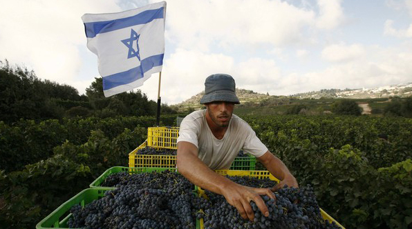 Dégustation de vins d'Israël à la Côte d'Azur